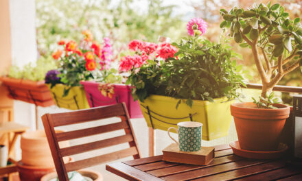 Plants, 10 Reasons To Love Them And You Should Too